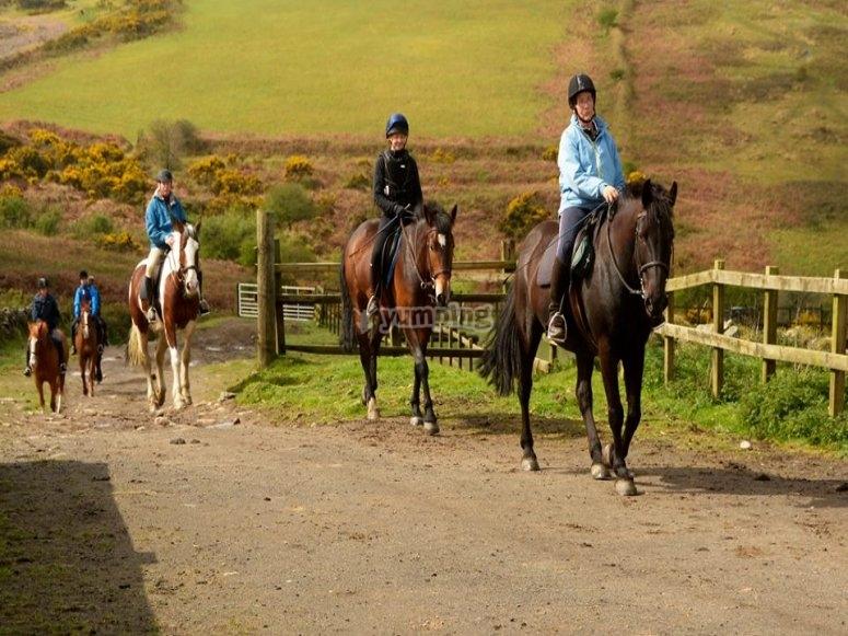 Horse trip