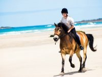 We have available spaces for beach riding at Gwithian Beach