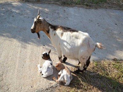 Visit to La Granja + Pony Ride for Children - 1h