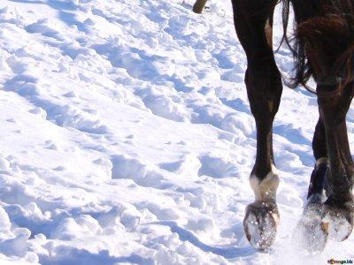 1h horseback ride tour in the snow in La Cerdanya