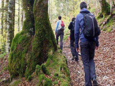 Hiking in the Hayedo de Montejo, 1 day
