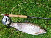 Trout Angling