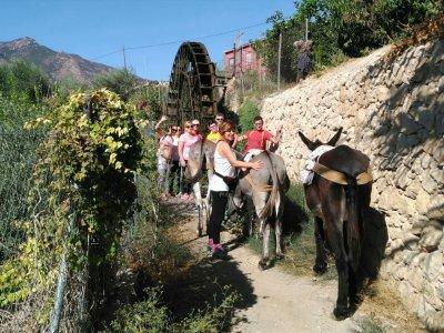 Proyecto Burruticas Paseo en Burro