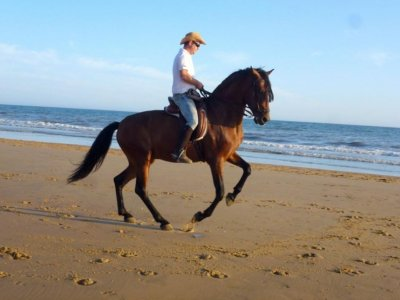 Horse riding tour Doñana. Drinks and sweets
