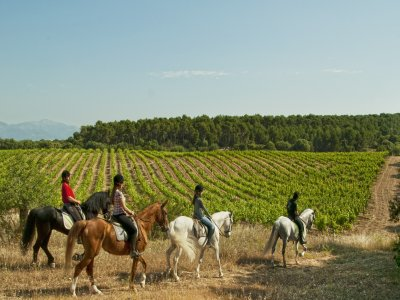 Horse-riding in Mallorca, 3 hours and a half