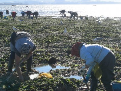 Shellfish pickup workshop in Isla de Arosa - 2h