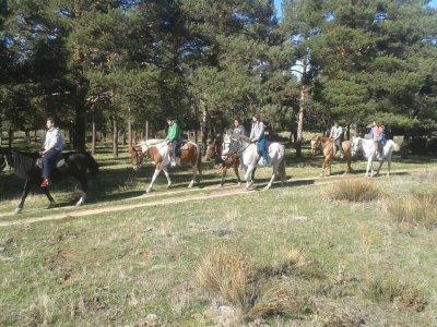 Urban Horse Riding Camp in La Granja 2 weeks