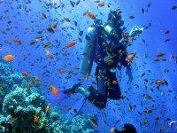 Become a PADI Master Scuba Diver.