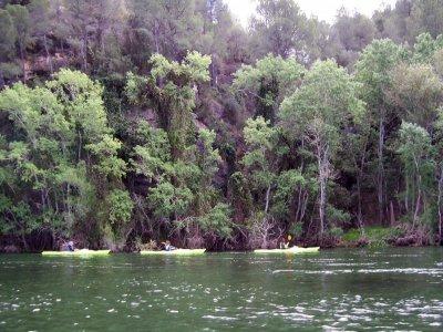 Kayaking from Miravet to Benifallet, 3h