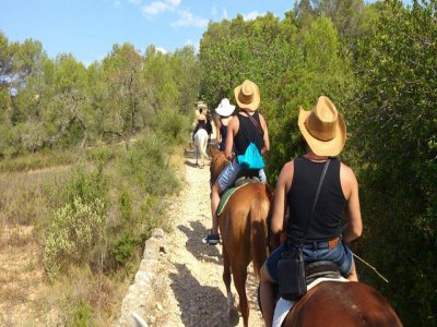 Purebred Spanish Horse in Valles de Randa