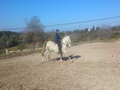 Horse riding route, Las Marismas, Mallorca, 4h
