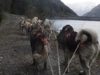 Wheeled sleigh Dog Sledding Moncayo Adults 30 min