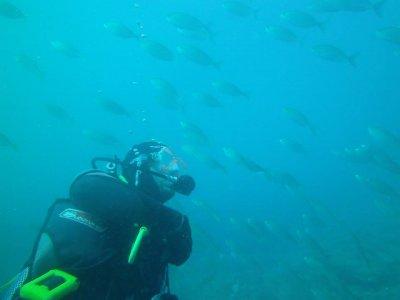 Night Dive In Benidorm With Equipment