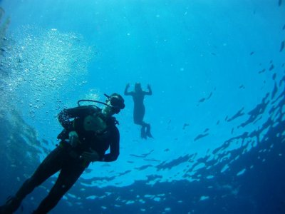 10 diving immersions with equipment, Benidorm