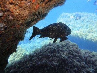 6h diving safari in Illes Medes