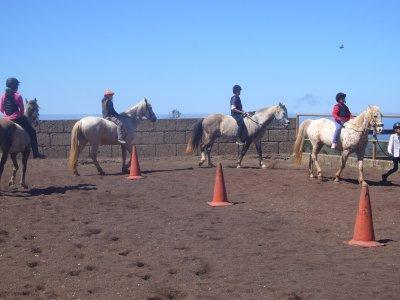 Horse Riding Class La Laguna, Tenerife, 1 hour