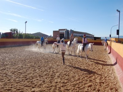 Learn to horse ride in Llíria. 50 minutes.