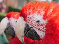 Our parrots!