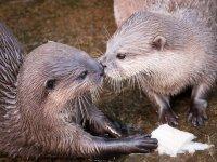 Lovely otters!