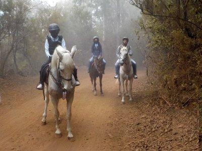 2-hour Quad Tour La Orotava for Residents
