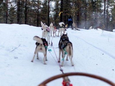 Dog Sledding route in snow 15 min in Cerler