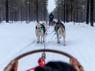 Romantic Dog Sledding Route full moon in Cerler