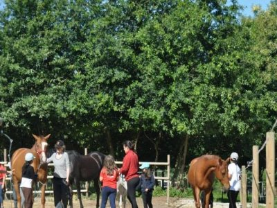 Horse riding lessons in Orense monthly voucher