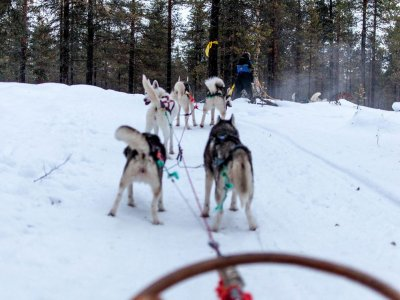 Dog Sledding Route in Benasque valley 1 hour Kids