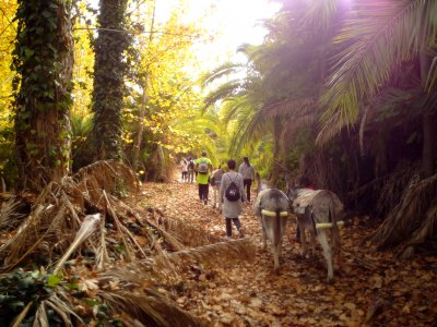 Norias Route w. Donkeys at Abarán Companions