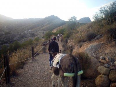 Norias Route w. Donkeys at Abarán