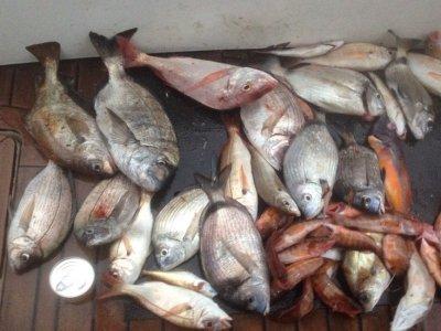 Coastal fishing boat trip in Gijón 4 hours