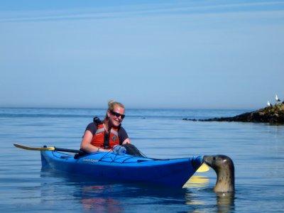 Half Day Kayaking Trip in Devon