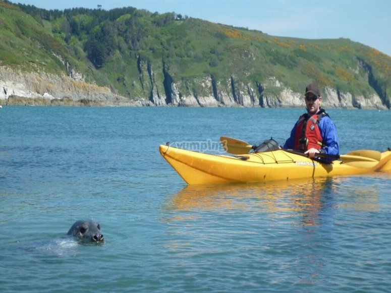 Sea wolf and kayaking.jpg