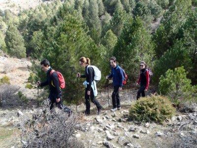 Hiking on Ardal mountain half day