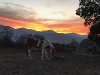 Horse Taming in Los Ángeles de San Rafael