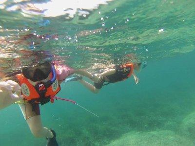 Snorkelling in Cartagena Oceanic posidonia