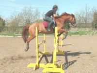 Showjumping at Vogrie Riding School