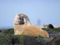 Grey seals!