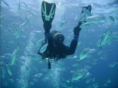 Phoenix Divers Sunderland