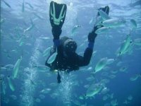 Magnificant diving