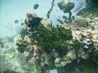 Beautiful underwater structures