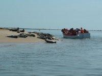 Seal spotting