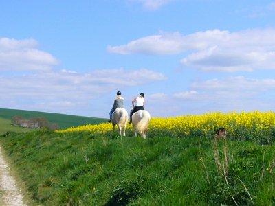 Horseback Riding in Gandía Marshlands, 1 Hour