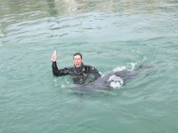 Excellent dive
