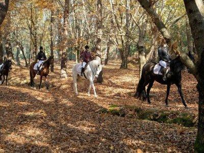 Horseback riding tour Bríon Embrat, 1 hour