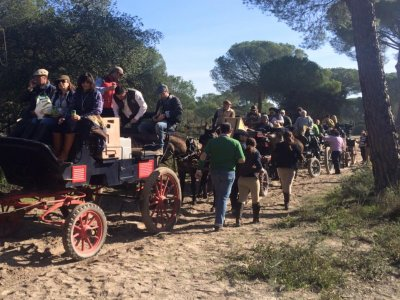 1h horse-drawn carriage journey in Huelva