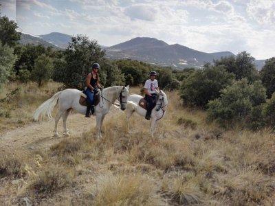 Horse Trip Segovia for 2 + Meal in Asador