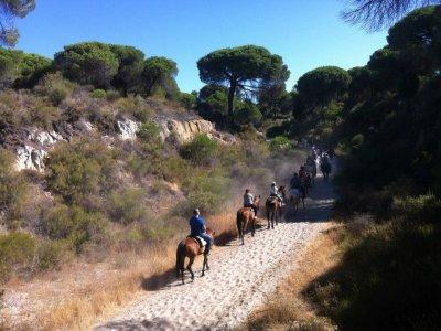 Horse Riding in El Rocío and Doñana Rebujito Wine