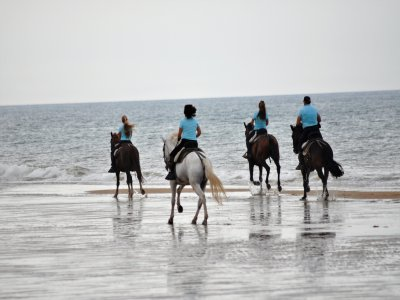 Private horse-riding route at Doñana's dunes