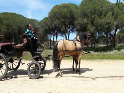 Horse-drawn carriage ride in El Rocío free kids